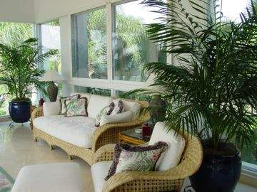 Indoor Plant Design And Care