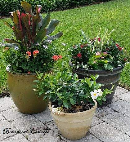 VeroBeach_BotanicalConcepts_Container_Gardening_grouping