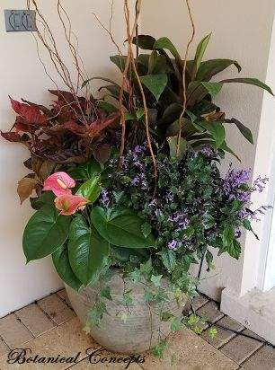 VeroBeach_BotanicalConcepts_Container_Garden_for_shade_mixed_foliage_flowers