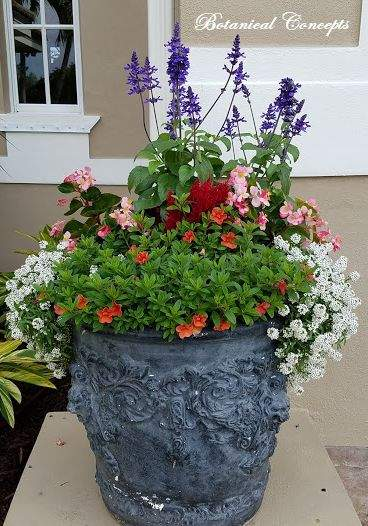 VeroBeach_BotanicalConcepts_Container_Gardening_mixed_annuals