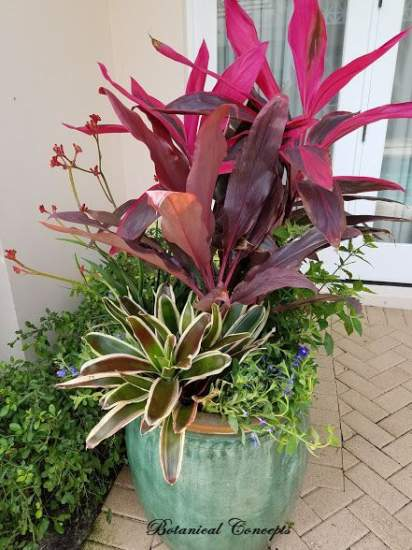 VeroBeach_BotanicalConcepts_Container Gardening_colorful_foliage_flowers