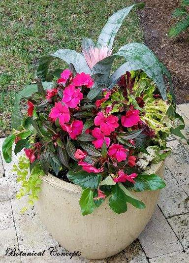 VeroBeach_BotanicalConcepts_Container_Garden_for_shady_location