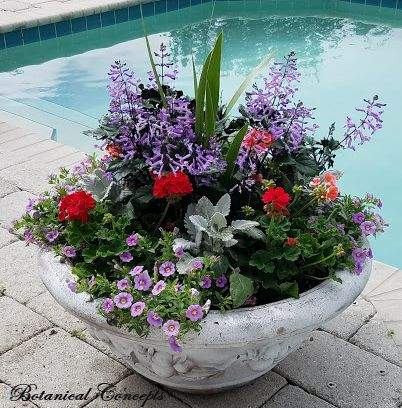 VeroBeach_BotanicalConcepts_Container_Gardening_large_bowl_mixed_annuals