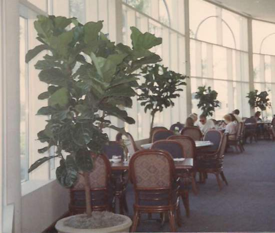 VeroBeach_Botanical_Concepts_Indoor_Plants