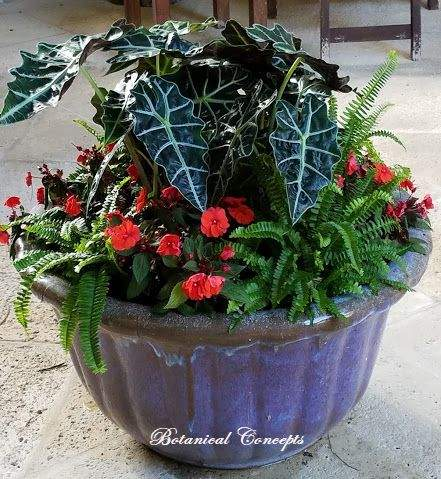 VeroBeach_BotanicalConcepts_Container_Garden_for_shade